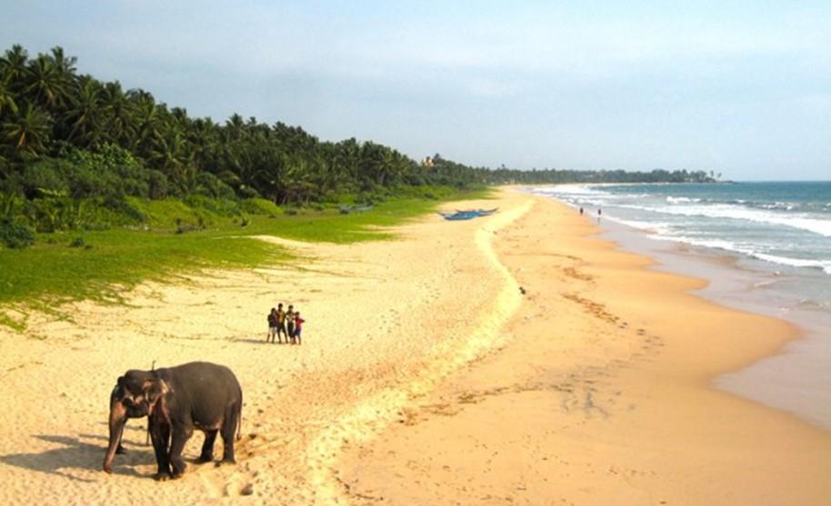 Sloni na pláži v okolí Induruwy