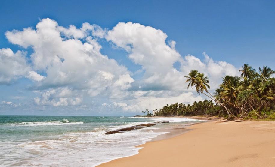 Kokosové palmy na opuštěné písečné pláži