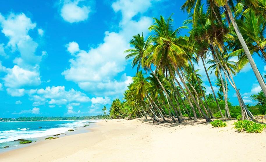 Alej kokosových palem na pláži s bílým pískem
