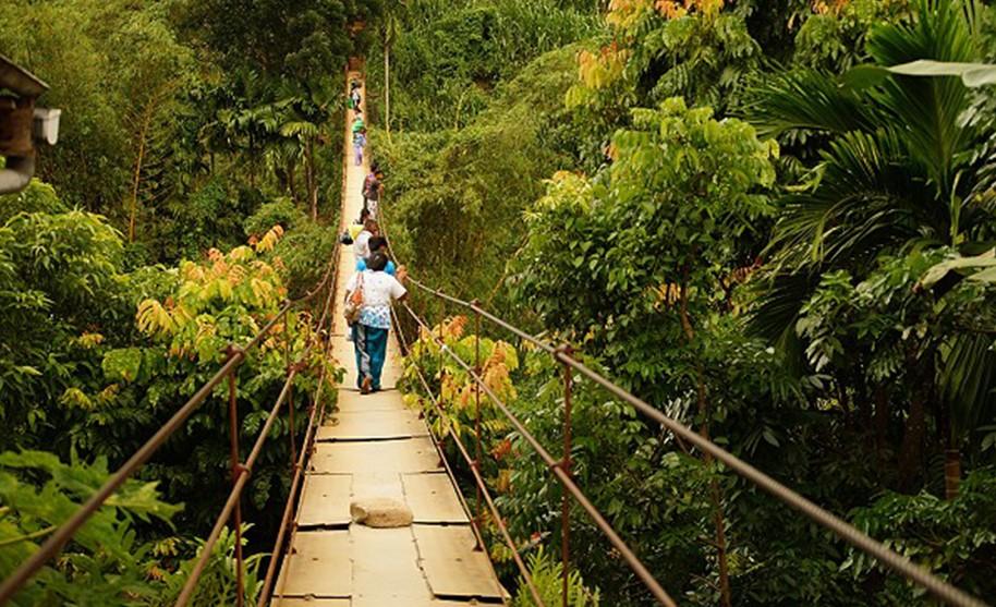 Lanový most v džungli, Srí Lanka