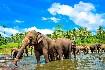 Kolonnie slonů, Srí Lanka