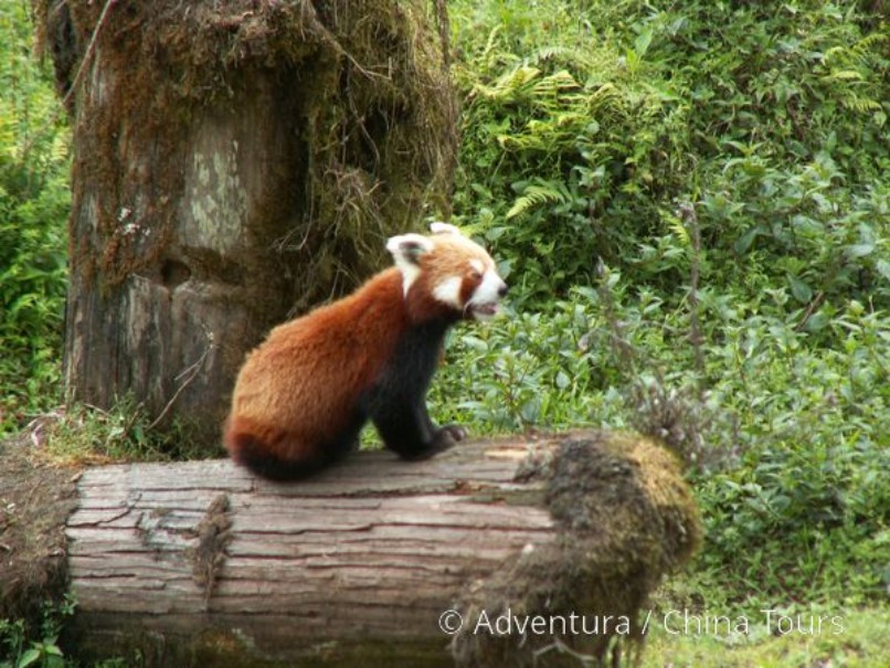 Nepál, Sikkim a Bhútán (fotografie 15)