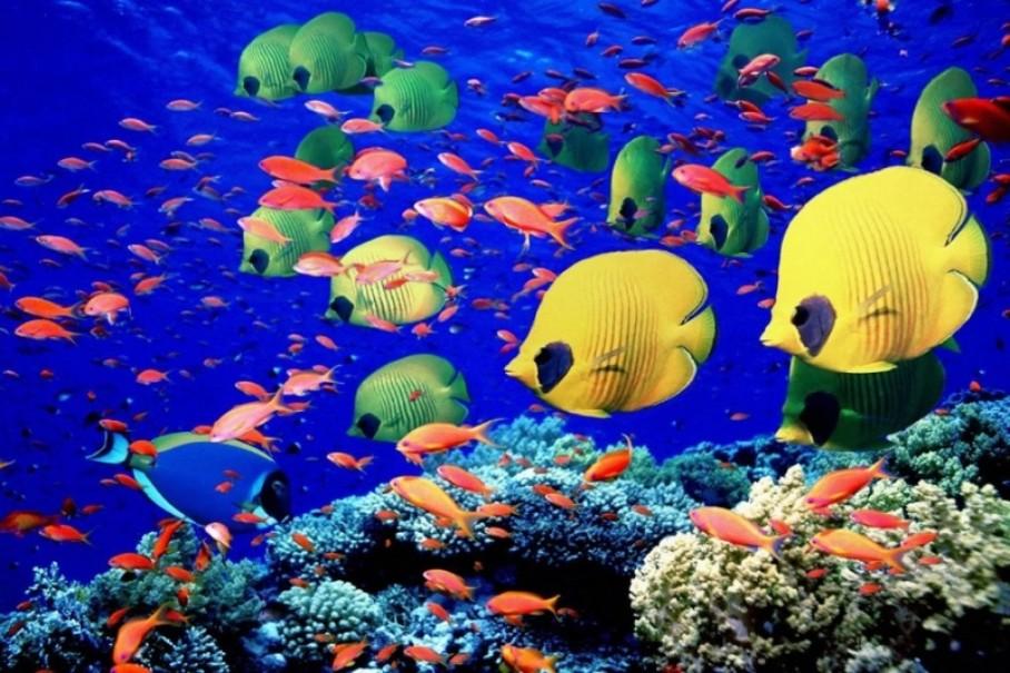 Medhufushi Island Resort (fotografie 7)