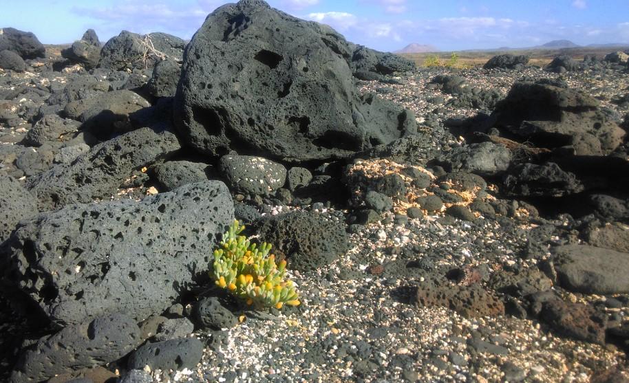 lávové kameny na na Fuerteventura na Kanárských ostrovech