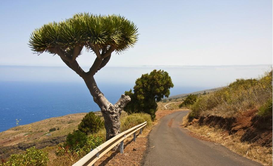 vyhlídka na Atlantik a rostoucí dračinec na La Palma