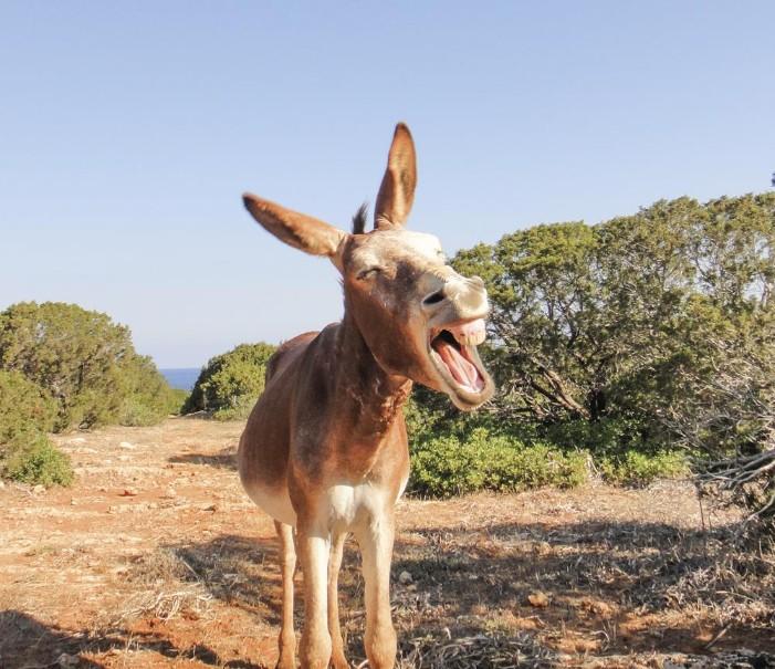 Cesta za perlami Kypru (fotografie 6)