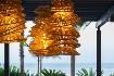 Corallium Dunamar By Lopesan Hotels (fotografie 63)