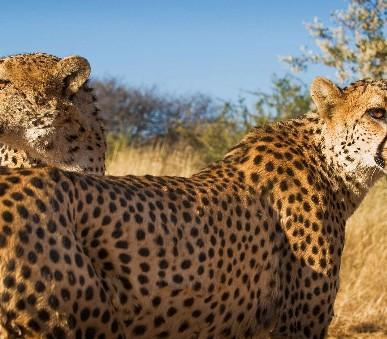 Zimbabwe - Botswana - Namibie - Jar - Vodopády a safari