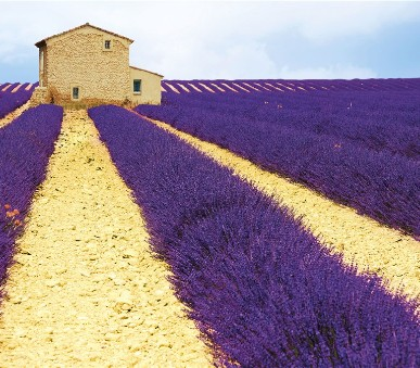 Provence s vůní levandule a chutí vína