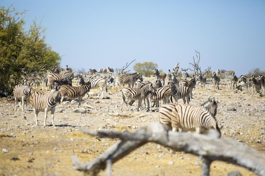 Namibie - Svůdná a nepoznaná | Program od 2020 (fotografie 13)