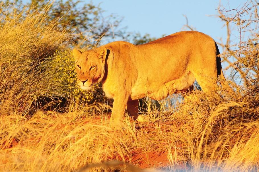 Namibie - Svůdná a nepoznaná | Program od 2020 (fotografie 11)