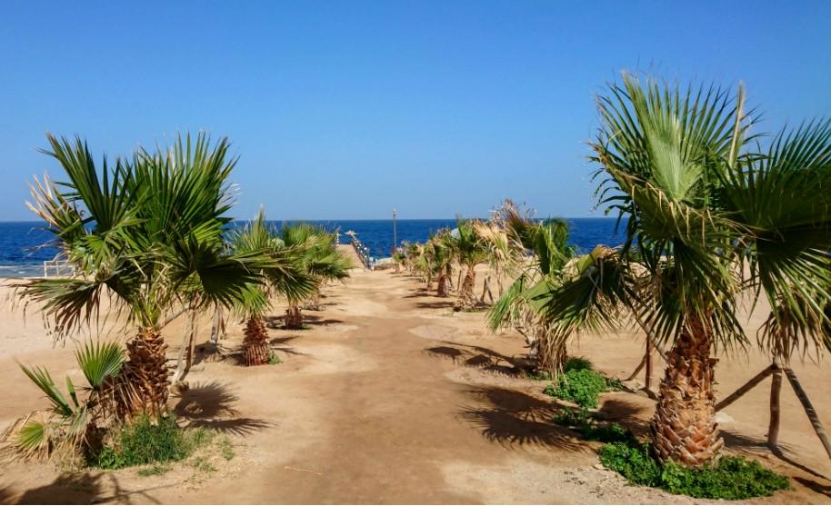 Písečná pláž a palmy v Marsa Alam v Egyptě