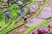 Perly Indonésie (fotografie 4)