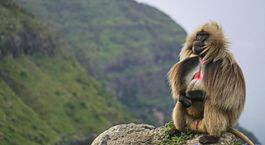 Velký okruh Etiopií (fotografie 2)