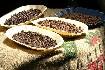 Kostarika s vůní kávy (fotografie 5)