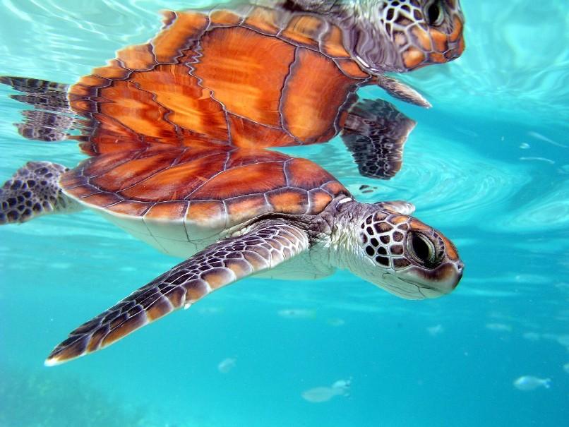 Francouzská Polynésie - Plavba (fotografie 17)