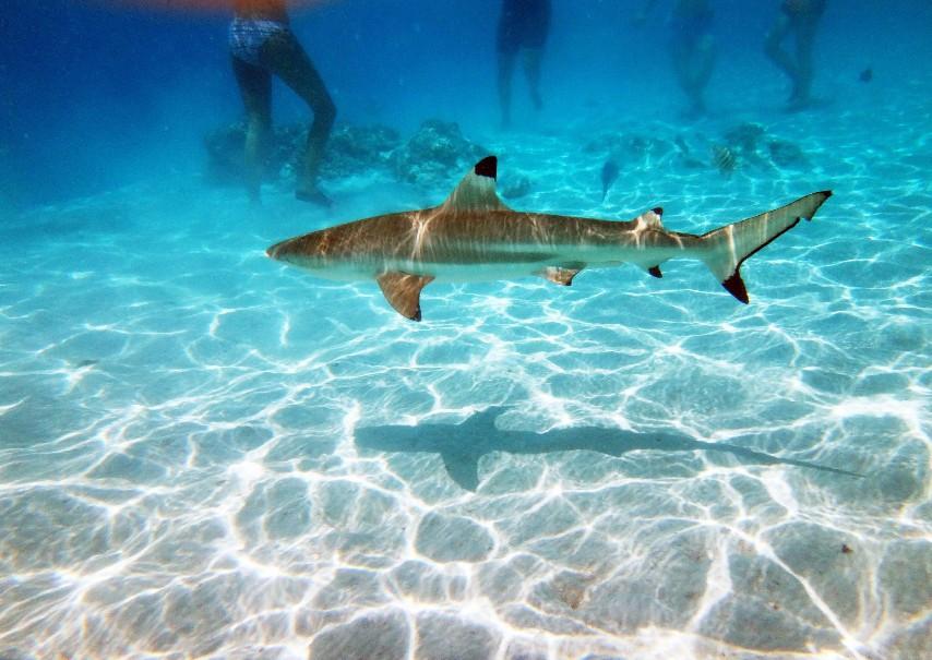 Francouzská Polynésie - Plavba (fotografie 20)