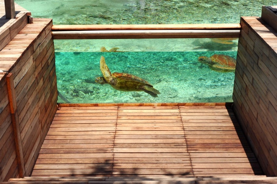 Hotel Le Meridien Bora Bora (fotografie 8)