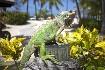 Hotel Palm Island (fotografie 32)
