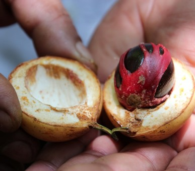 Za krásou Srí Lanky, Citrus Hikkaduwa