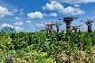 Singapur - perla Asie od A do Z (fotografie 1)