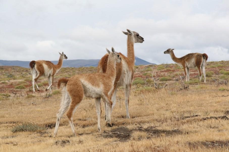 Patagonie a Ohňová země (fotografie 13)