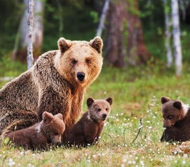 Putování Finskem s návštěvou divoké tajgy