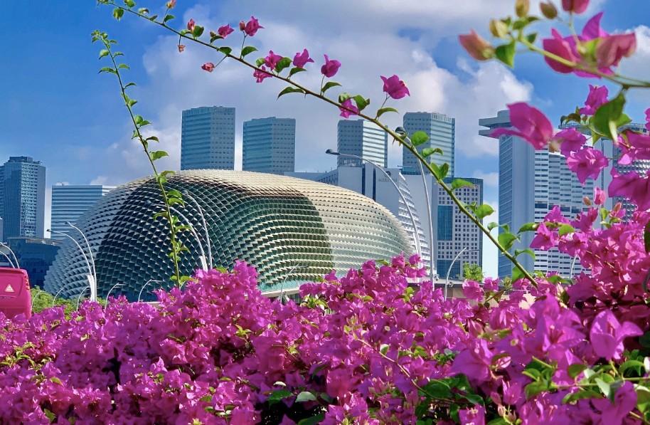 Singapur - perla Asie od A do Z (fotografie 33)