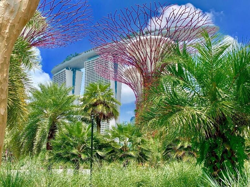 Singapur - perla Asie od A do Z (fotografie 15)