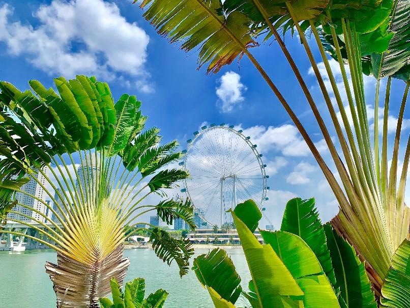 Singapur - perla Asie od A do Z (fotografie 16)