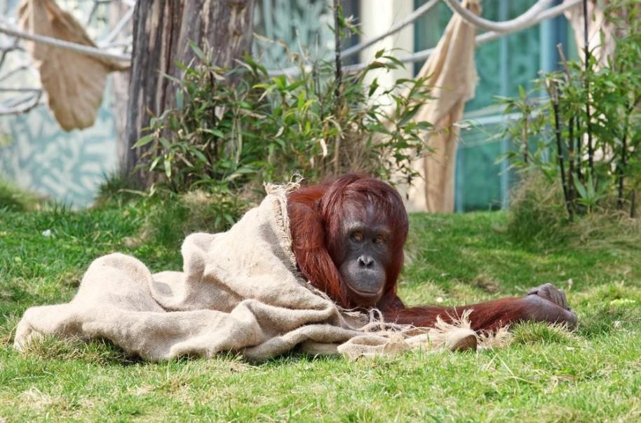Zoo Vídeň + Schönbrunn (fotografie 15)