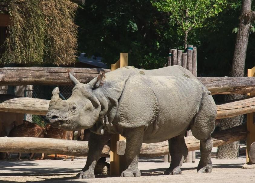 Zoo Vídeň + Schönbrunn (fotografie 17)
