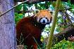 Zoo Vídeň + Schönbrunn (fotografie 19)