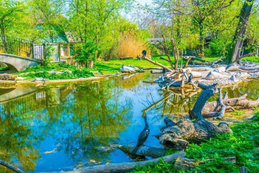 Zoo Vídeň + Schönbrunn (fotografie 20)