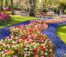 Zaanse Schans, Amsterdam a největší kvetoucí park v Evropě Keukenhof