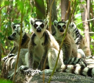 Madagaskar a Mauricius