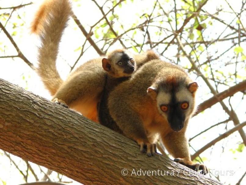 Madagaskar a Mauricius (fotografie 9)