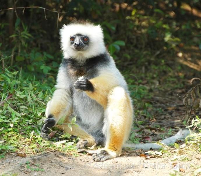 Madagaskar a Mauricius (fotografie 11)