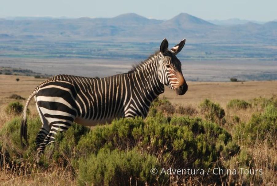 Velká cesta jižní Afrikou (fotografie 7)