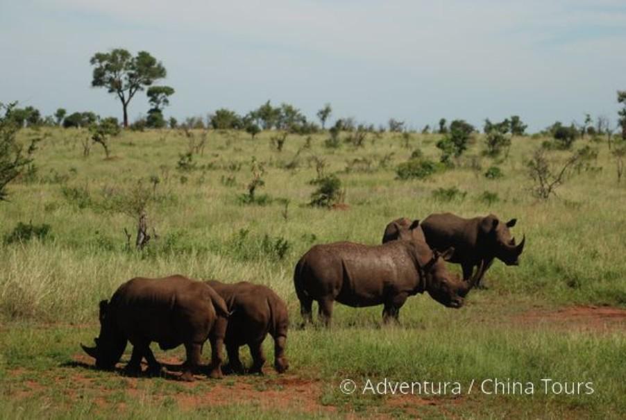 Velká cesta jižní Afrikou (fotografie 9)