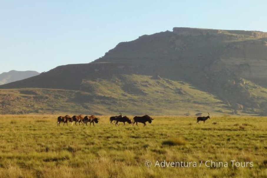 Turistika v jižní Africe – Dračí hory (fotografie 15)