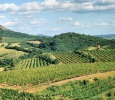 Čechy a Sasko - cesta za evropským vinařstvím