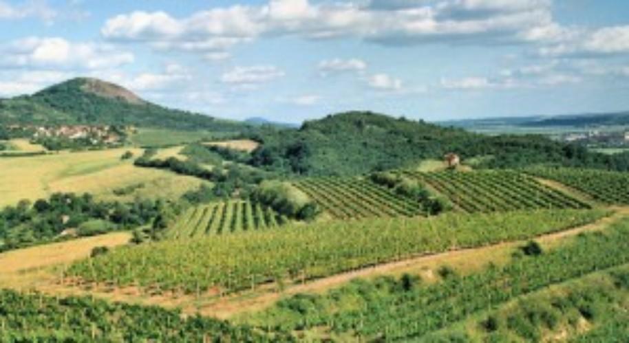 Čechy a Sasko - cesta za evropským vinařstvím (fotografie 1)