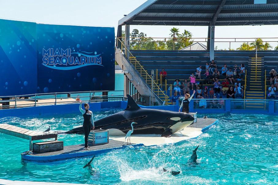 To nejlepší z Miami + NP Everglades + NASA + Bahamy (fotografie 1)