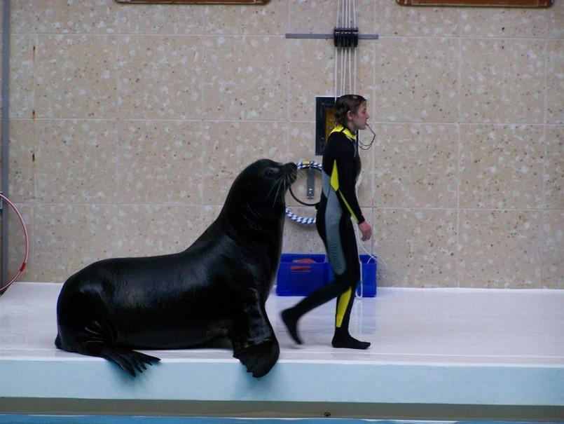 Delfinárium A Zoo V Norimberku (fotografie 9)