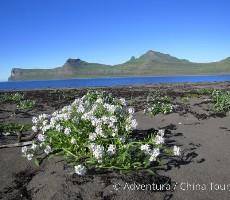 Island – Treking divočinou NP Hornstradir