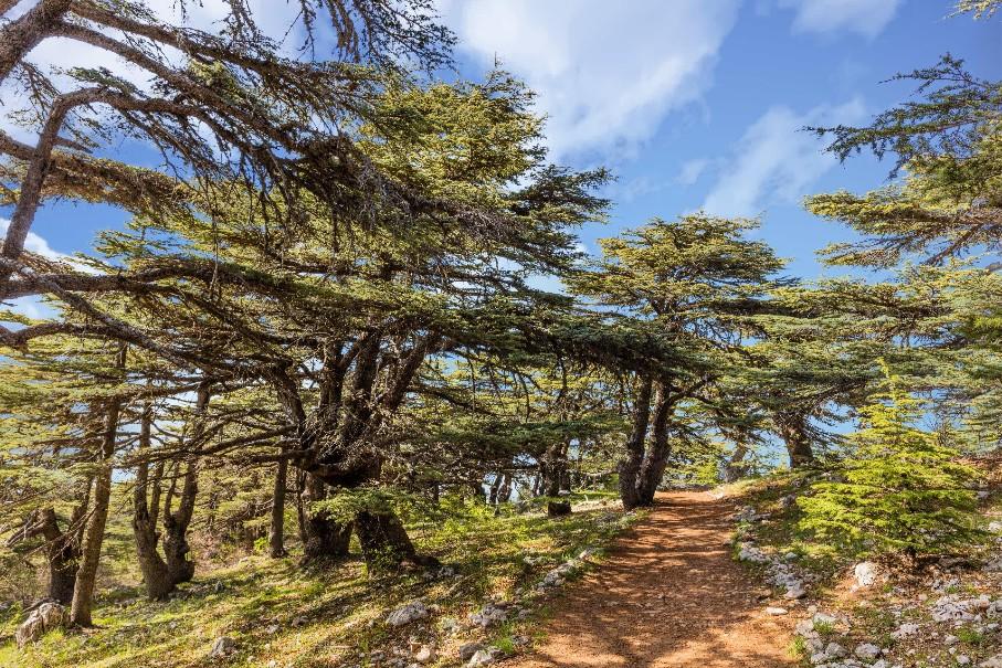 Libanon – Pokladnice bájných říší (fotografie 20)