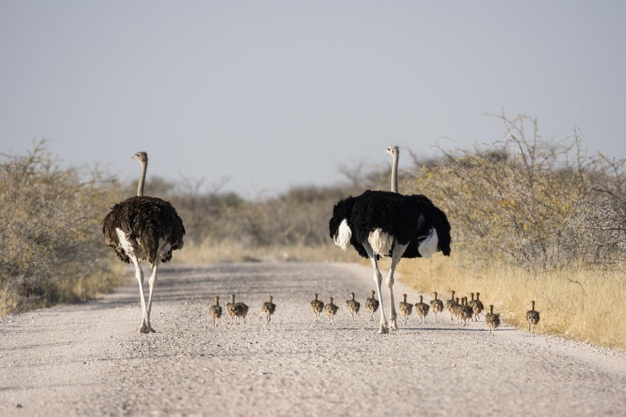 Namibie - Svůdná a nepoznaná | Program od 2020 (fotografie 27)
