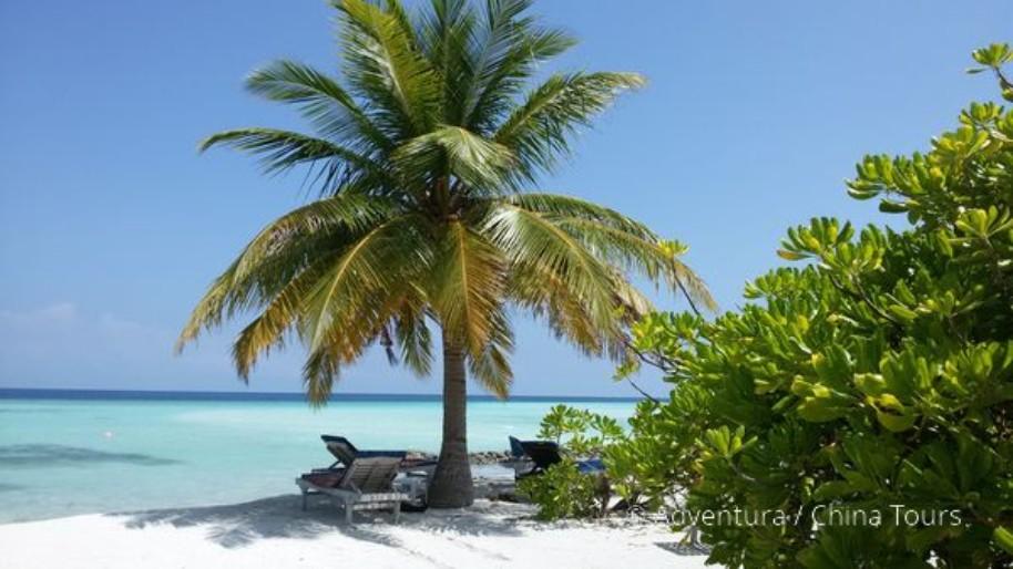 Toulky po Maledivách (fotografie 15)