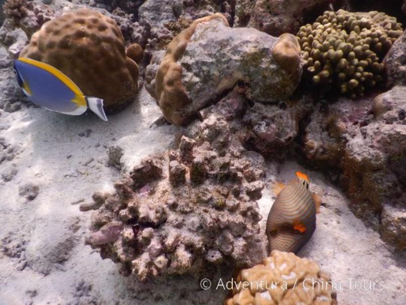 Toulky po Maledivách (fotografie 6)